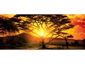 Fotobehang Natuur, Boom | Oranje | 250x104cm