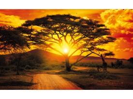 Fotobehang Natuur, Boom   Oranje   152,5x104cm