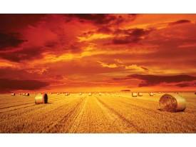 Fotobehang Vlies | Natuur | Oranje | 368x254cm (bxh)