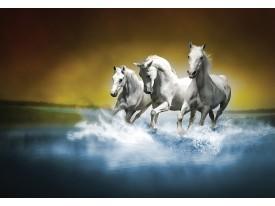 Fotobehang Vlies | Paarden | Blauw, Wit | 368x254cm (bxh)