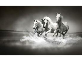 Fotobehang Paarden | Zwart, Wit | 208x146cm