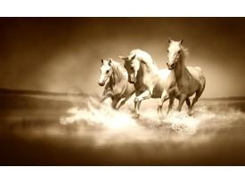 Fotobehang Paarden | Sepia | 312x219cm