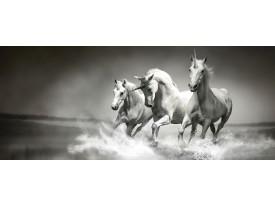 Fotobehang Paarden | Zwart, Wit | 250x104cm