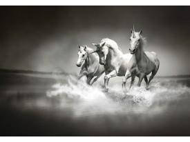 Fotobehang Vlies | Paarden | Zwart, Wit | 368x254cm (bxh)