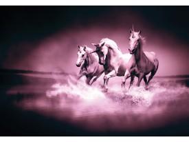 Fotobehang Vlies | Paarden | Paars | 368x254cm (bxh)