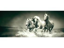 Fotobehang Paarden   Grijs, Groen   250x104cm