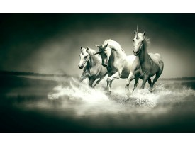 Fotobehang Paarden | Grijs, Groen | 312x219cm