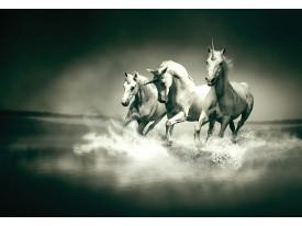 Fotobehang Vlies | Paarden | Grijs, Groen | 368x254cm (bxh)