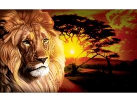 Fotobehang Papier Leeuw, Natuur | Oranje | 254x184cm