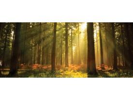 Fotobehang Bos | Groen | 250x104cm
