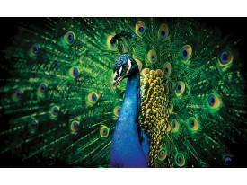 Fotobehang Pauw | Groen | 104x70,5cm