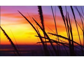 Fotobehang Bloem | Geel, Oranje | 312x219cm