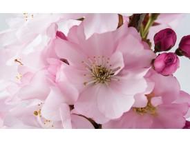 Fotobehang Bloemen | Roze | 416x254