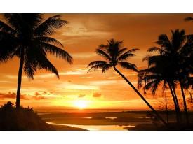 Fotobehang Tropisch | Oranje, Zwart | 208x146cm