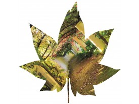 Fotobehang Natuur | Groen |