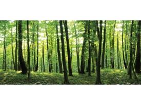 Fotobehang Vlies Bos, Natuur | Groen | GROOT 508x230cm
