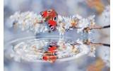 Fotobehang Vlies | Vlinder | Grijs | 368x254cm (bxh)