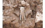 Fotobehang Vlies | Olifant | Bruin, Grijs | 368x254cm (bxh)