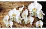 Fotobehang Vlies | Orchideeën, Bloem | Bruin | 368x254cm (bxh)