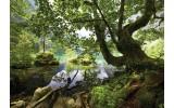 Fotobehang Vlies | Boom, Natuur | Groen | 368x254cm (bxh)