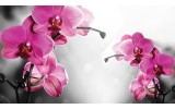 Fotobehang Vlies | Orchideeën, Bloem | Roze | 368x254cm (bxh)