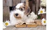 Fotobehang Vlies | Hond, Modern | Bruin | 368x254cm (bxh)