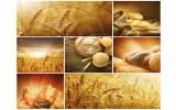 Fotobehang Vlies | Keuken, Landelijk | Bruin | 368x254cm (bxh)