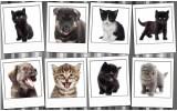 Fotobehang Vlies   Hond, Kat   Grijs, Wit   368x254cm (bxh)