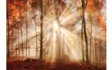 Fotobehang Vlies | Bos | Bruin, Oranje | 368x254cm (bxh)