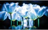 Fotobehang Vlies | Bloemen, Tulpen | Blauw | 368x254cm (bxh)