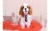 Fotobehang Vlies | Hond | Bruin, Rood | 368x254cm (bxh)