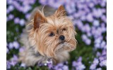 Fotobehang Vlies | Hond | Bruin, Paars | 368x254cm (bxh)