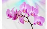 Fotobehang Vlies | Bloemen, Orchidee | Roze, Paars | 368x254cm (bxh)
