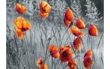 Fotobehang Vlies | Klaproos | Grijs, Oranje | 368x254cm (bxh)
