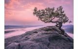 Fotobehang Vlies   Natuur   Paars, Roze   368x254cm (bxh)