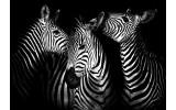 Fotobehang Vlies | Zebra | Zwart, Wit | 368x254cm (bxh)