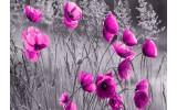 Fotobehang Vlies | Klaproos | Grijs, Roze | 368x254cm (bxh)