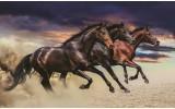 Fotobehang Paarden | Bruin | 152,5x104cm