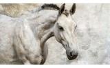 Fotobehang Paarden | Wit | 312x219cm