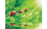 Fotobehang Natuur | Rood, Groen | 416x254