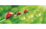 Fotobehang Natuur | Rood, Groen | 250x104cm