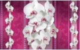 Fotobehang Bloemen, Orchideeën | Roze, Wit | 416x254