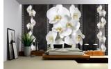 Fotobehang Bloemen, Orchideeën | Zwart, Wit | 208x146cm