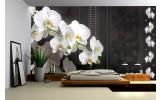 Fotobehang Bloemen, Orchideeën | Wit | 416x254