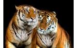 Fotobehang Wilde dieren | Zwart | 208x146cm