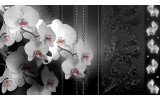 Fotobehang Bloemen, Orchidee | Zwart | 152,5x104cm