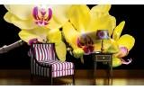 Fotobehang Bloemen, Orchidee | Geel | 416x254