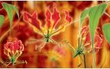 Fotobehang Bloemen | Oranje | 416x254