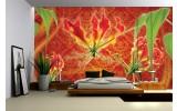 Fotobehang Bloemen | Oranje, Rood | 152,5x104cm