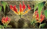 Fotobehang Vlies | Bloemen, Muur | Groen, Rood | 368x254cm (bxh)